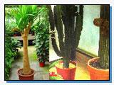 Azienda di Floricoltura